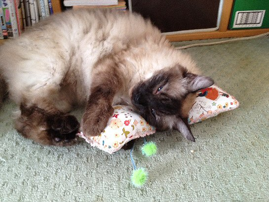 猫とおもちゃ.jpg