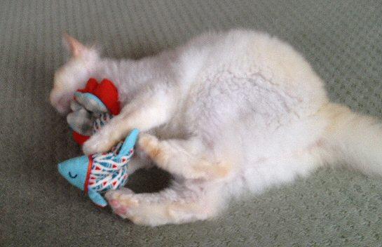 猫とおもちゃ2.jpg