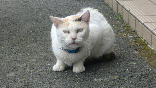 目つきの悪い猫.JPG