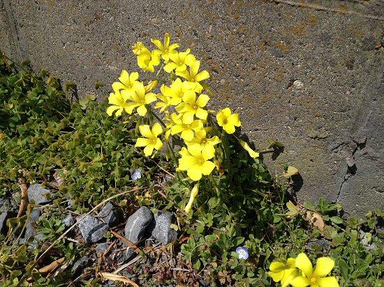 春の花1.jpg