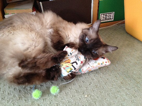 猫とおもちゃ1.jpg