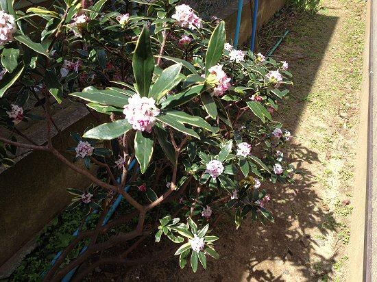花の香り1.jpg
